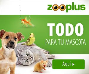 Mascotas codes